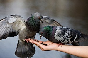 Every act of kindness is good karma. Mindful acts of kindness is good practice.