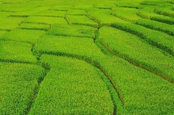 Buddhist Mantras Help Crops Grow — Increase Output by Fifteen Percent; Studies Reveal the Power of Mantras to Help Plants — People