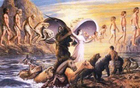 Rebirth Illustrated
