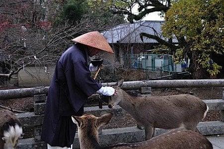 Buddha Weekly Japanese Monk takes break to caress a deer Buddhism