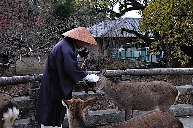 Japanese monk shares a tender moment with a non-human. Zen and Mahayana Buddhists particularly avoid meat.