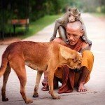 Buddha Weekly Monk with dog and monkey friend shows compassion kindness Buddhism