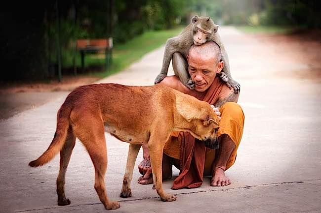 Monkey And Dog Japanese Show