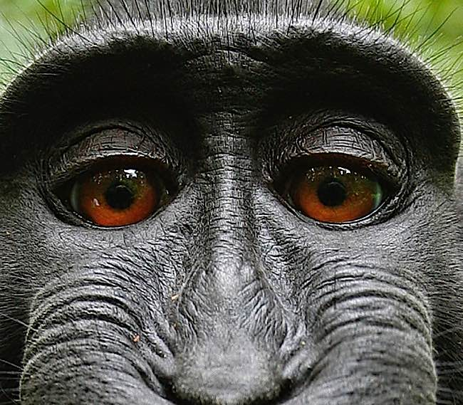 Recently, a monkey won the rights to a selfie photo over the owner of the camera.