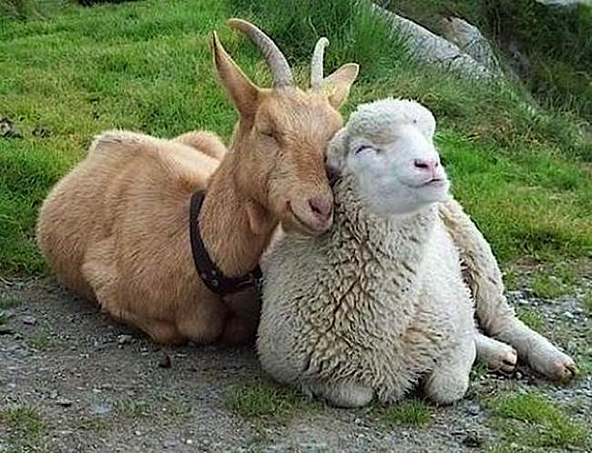 Sentient animals around the world feel happiness, pain and suffering. Here are two happy friends.