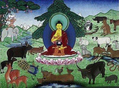 Buddha Weekly Buddha and the animals Buddhism