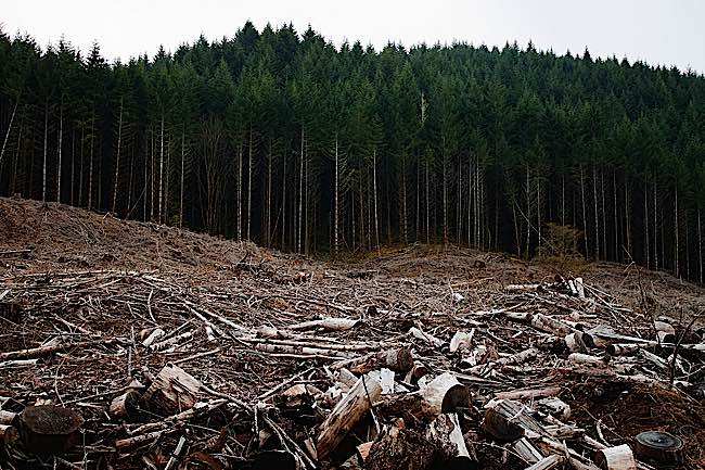 Clear cutting is necessary to create more land for meat production. Currently, 36% of non-ice land in the world is used in meat production, expected to grow to 45%.