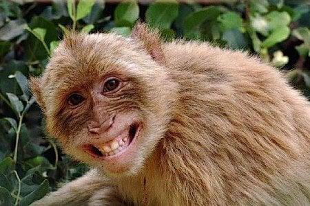 Buddha Weekly Deforestation is threat to happy animals Buddhism