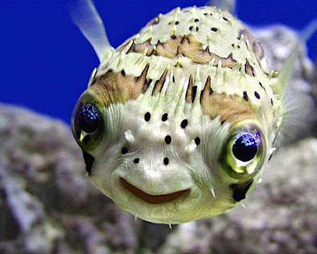 Even fish feel emotions, according to scientists.