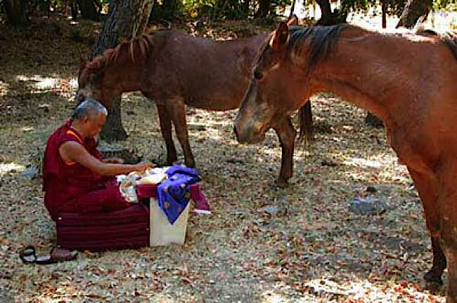 Lama Zopa Rinpoche blesses horses at a rescue farm.