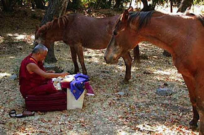 Lama Zopa Rinpoche blesses horses at a rescue farm.