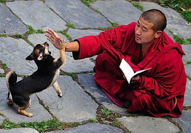 A monk, while in practice, shares with a puppy.