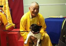 What the Teachers Say About Doggie Dharma: Did Buddha Teach That Dogs and Cats Have Buddha Nature? How Can You Help Your Companion Meet the Dharma in Daily Life? What to Do About Euthanasia?