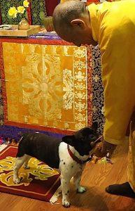 Buddha Weekly Zasep Rinpoche plays with dog at retreat Buddhism