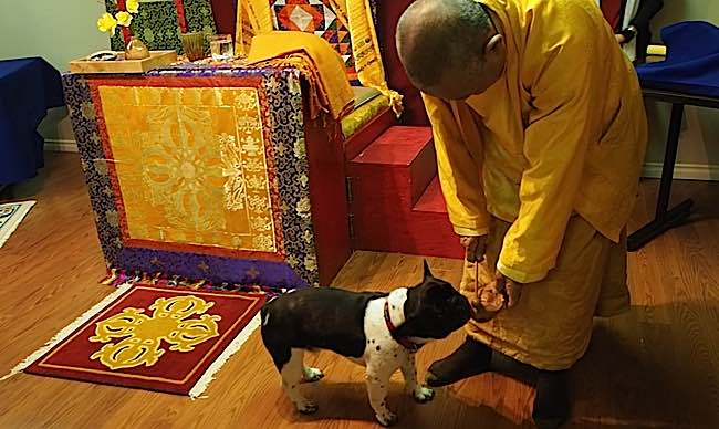 Venerable Zasep Tulku Rinpoche takes a moment to play with a puppy brought to a Medicine Buddha retreat for blessing.
