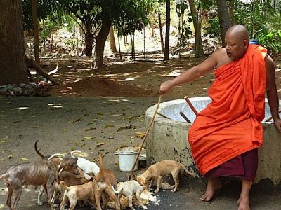 Buddha Weekly monk feeding stray dogs Buddhism