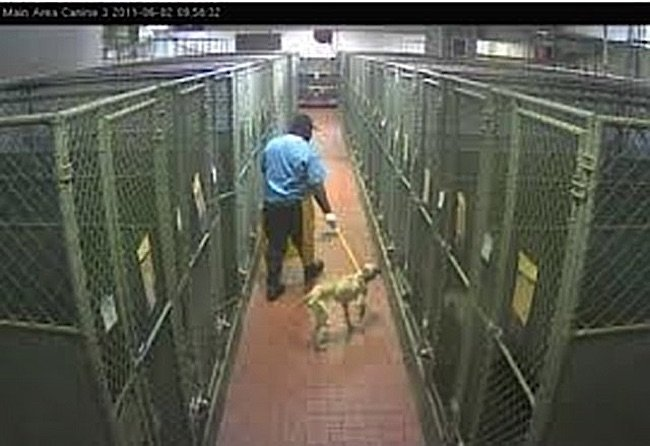 High volume euthanasia in animal shelters, as high as 69% in many shelters, is a routine daily event, often carried out without compassion.