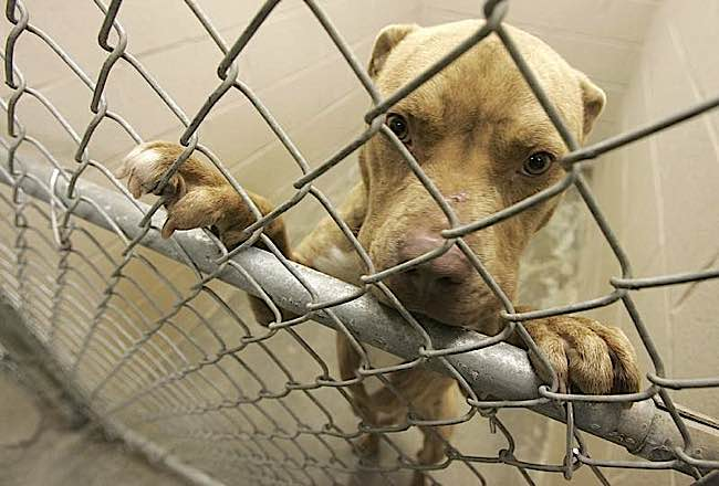 2.7 million dogs and cats in the US alone are euthanized each year, most due to pressures of crowding.