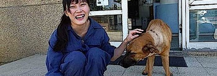 """Veterinarian's Suicide with Animal Euthanasia Drugs a Protest Against Animal """"Mercy"""" Killings: What Do Buddhist Teachers Say About Animal Euthanasia?"""