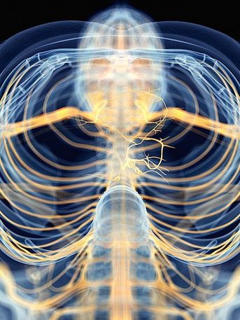 The Science Of Your Center: The Vagus Nerve, Your Meditation Highway, And The Parasympathetic Nervous System; How Meditation Works Positively on the Body