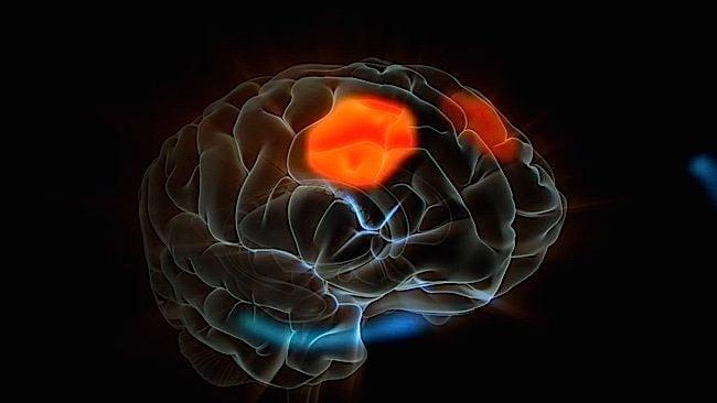 Buddha Weekly Pre frontal Cortex Brain Buddhism