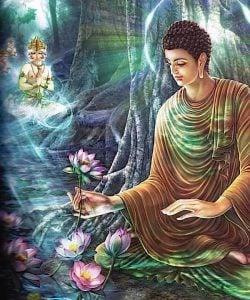 Buddha Weekly Buddha and the lotus Buddhism