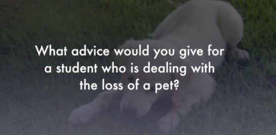 Advice for loss of a pet Zasep Tulku Rinpoche Buddha Weekly