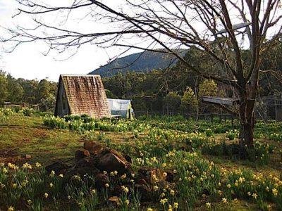 Buddha Weekly Flowers and retreat hut dorje ling Buddhism