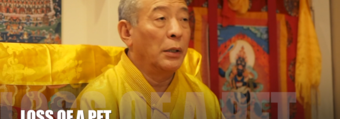 Video: Students Ask the Buddhist Teacher: What advice would you give for a student who is dealing with the loss of a pet? Venerable Zasep Tulku Rinpoche