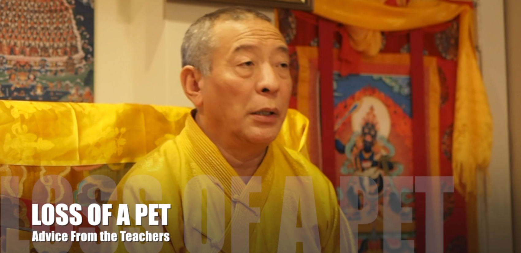 Zasep Tulku Rinpoche answers student how to deal with loss of pet Buddha Weekly