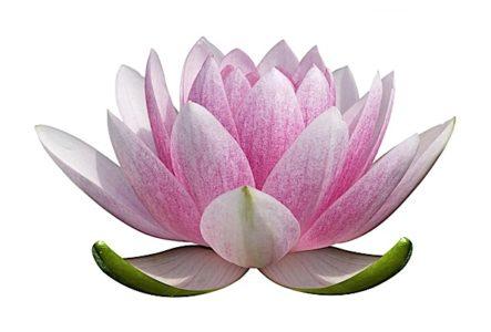Buddha Weekly Close cropped illustration Lotus Buddhism Buddhism