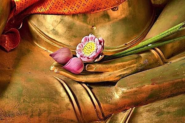 Hoa sen tinh khiết dù xuất hiện từ bùn. Tương tự như vậy, Phật tánh của chúng ta sẽ vượt qua những chướng ngại gây ra bởi chấp trước, bản ngã và ác nghiệp.