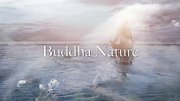 Buddha Weekly Buddha Nature Video Zasep Tulku Rinpoche Buddhism