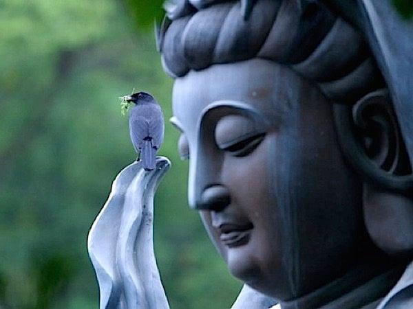 Buddha Weekly Kuan yin and bird Buddhism