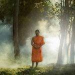 Buddha Weekly Walking Meditation Buddhist Monk in Forest Buddhism