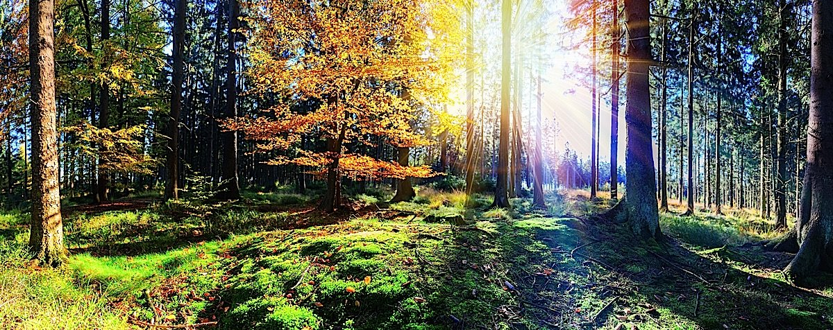 Buddha Weekly Beautiful forests recharge our spiritual self Buddhism