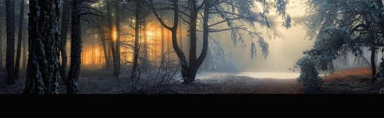 Buddha Weekly Fog in the forest nature Buddhism