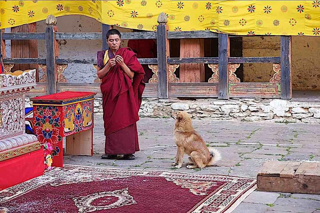 Buddha Weekly Buddhist Dog with Monk at temple Jakar Dzong Bhutan Buddhism