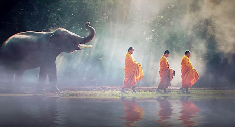 Buddha Weekly Buddhist Monks being followed by an elephant Buddhism