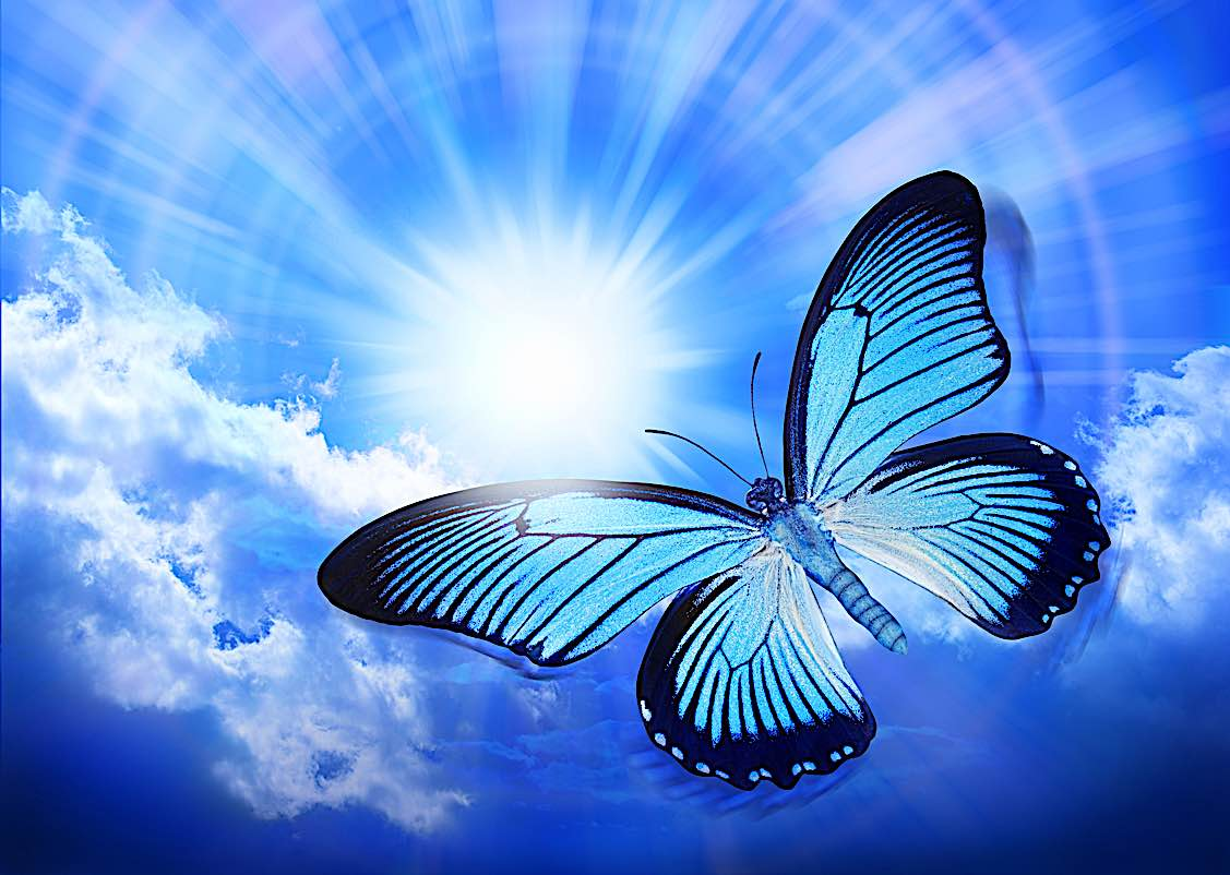 Buddha Weekly Butterfly reincarnation concept Buddhism