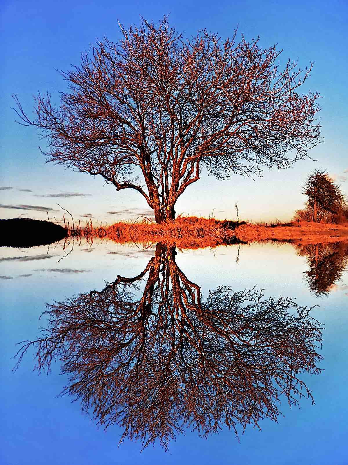 Buddha Weekly Dualism reflected tree Buddhism 2