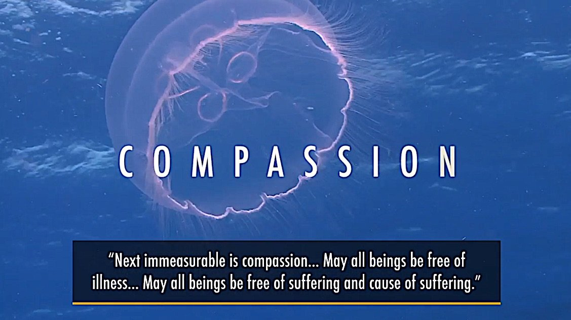 Buddha Weekly Medicine Buddha Second immeasurable Compassion for all beings Buddhism