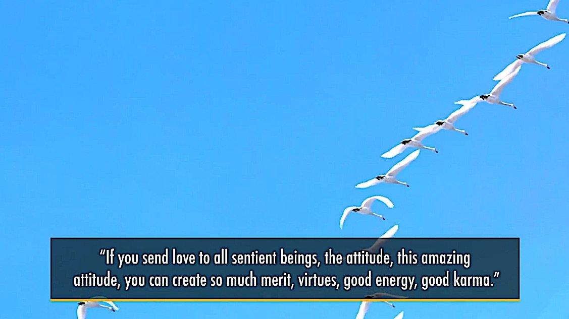 Buddha Weekly Medicine Buddhad Retreat If you send love to all sentient beings good karma Buddhism