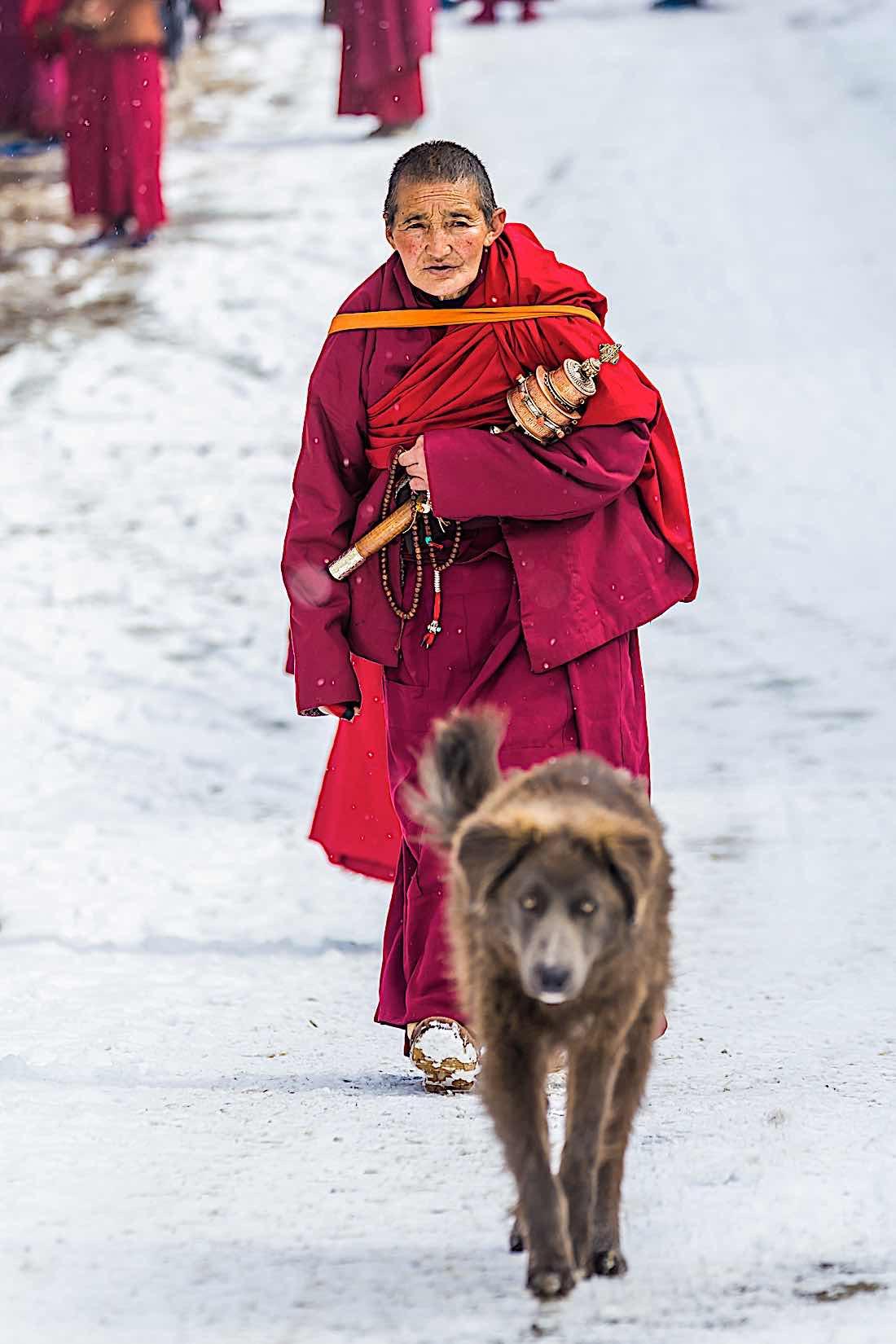 Buddha Weekly Monk walkilng mindfully with dog Buddhism