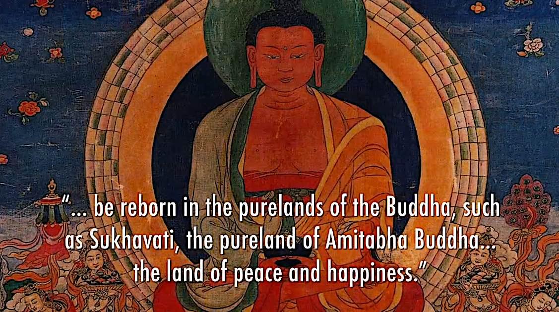 Buddha Weekly Reborn in the purelands of Amitabha Buddha Buddhism