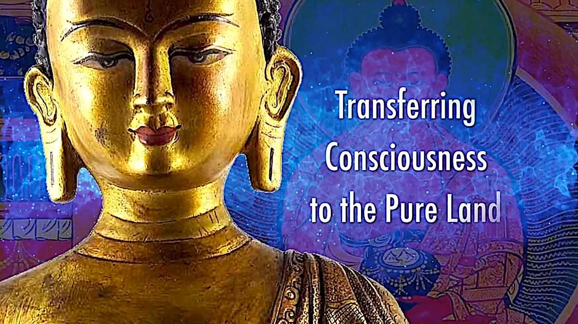 Buddha Weekly Transfering consciousness to Amitabha Pureland Sukhavati Powa Practice H E Zasep Rinpoche Buddhism