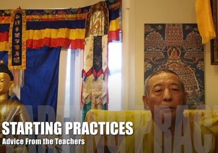 Buddha Weekly Video Advice from the Teachers 6 For the Beginner Starting Practices Buddhism Zasep Tulku Rinpoche