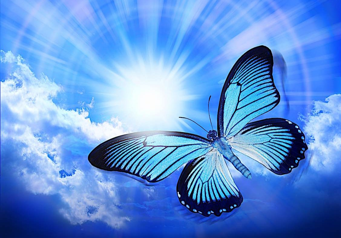 Buddha-Weekly-Butterfly reincarnation concept-Buddhism