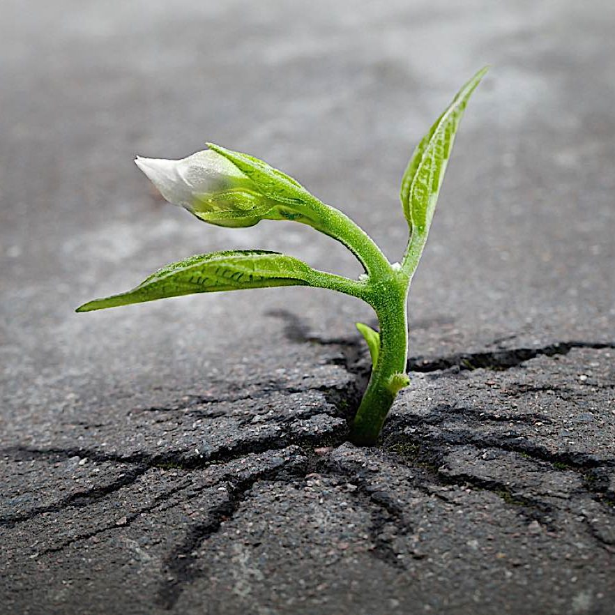 Buddha-Weekly-Growing the cracks of addiction-Buddhism