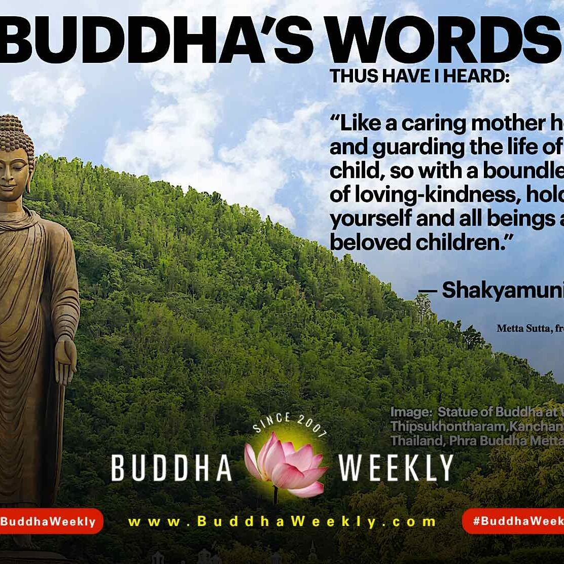 New series on Buddha Weekly: In Buddha's Words. Actual verified Quotable quotes from the Buddha with citations from source.